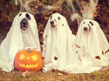 Trick or treat – tackling online horror stories